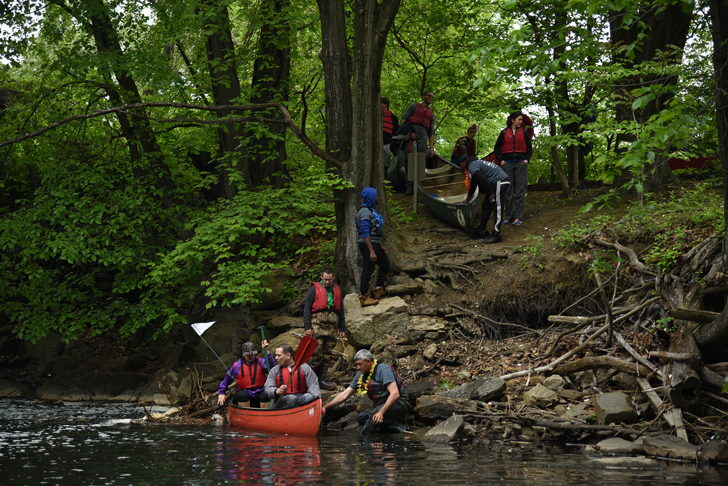 Canoeing along the restored bronx river curbed ny - Bronx botanical garden free admission ...