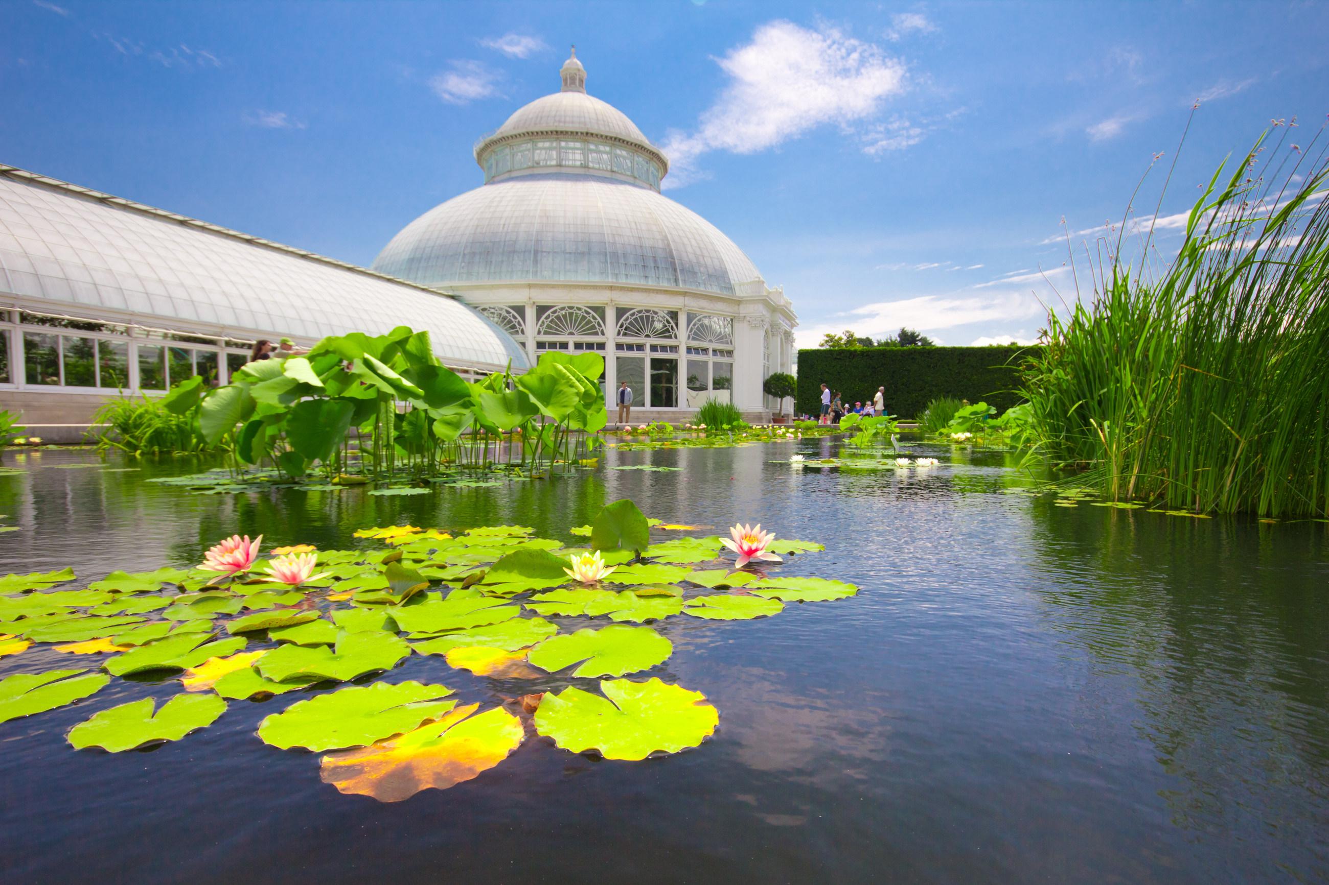 Curbed new york pocket guide spring 2017 curbed ny - New york botanical garden directions ...