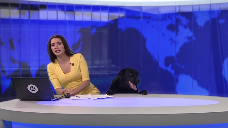 Excited dog interrupts Russian news broadcast, clip goes viral